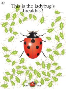 circle ladybug