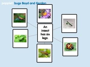 boyd bug