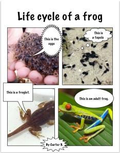 carter_b_frog