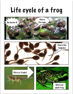carter_r_frog